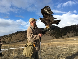 Rocky Connell is pictured with his latest rehabilitation client, Lilith, a golden eagle.